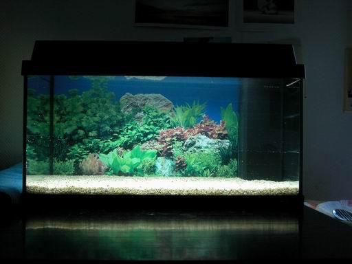 3dcs   Aquarium